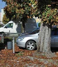 Stadtplatz-Auto-Baum