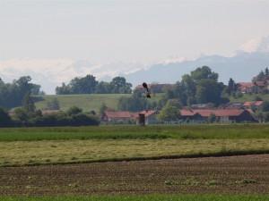 Auf diesem Gelände brüten mindestens drei Kiebitz-Paare.