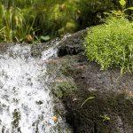 Trinkwasser Quelle